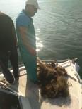 AKBÜK - Kaçak Olarak Serilen 800 Metre Balık Ağı Ele Geçirildi