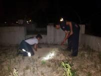YAVRU KEDİ - Kanala Düşen Yavru Kedi Kurtarıldı