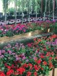 AVCILAR BELEDİYESİ - Kurban Bayramında Mezar Ziyaretine Çiçek İkramı
