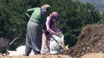 GIDA SEKTÖRÜ - 'Mucize Bitki'nin Tohumları Toprakla Buluşuyor