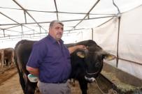 KAZANCı - Yem Fiyatlarının Artması Üreticiyi De Tüketiciyi De Etkiledi