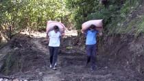 TOPRAK KAYMASI - 'Fındıkta Hasar Tespit Çalışmaları 10 Gün İçinde Tamamlanacak'