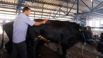 KİMYASAL MADDELER - 'Hayvanın Refahını Koruyun Etiniz Lezzetli Olsun'