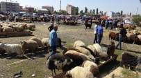 Kars'ta Kurban Pazarında Bayram Yoğunluğu
