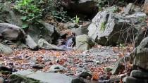 MARMARA DENIZI - Tekirdağ, Eşsiz Doğası Ve Mavi Bayraklı Plajlarıyla Tatilcileri Bekliyor