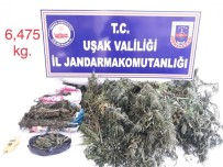 Uşak'ta 6 Kilo 475 Gram Uyuşturucu Ele Geçirildi
