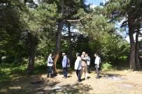 Çıra İçin Tahrip Edilen Çam Ağaçlarının Kurumaması İçin Harekete Geçildi