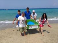 CARETTA CARETTA - Güzelçamlı Sahilinde Ölü Caretta Caretta Bulundu