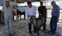 MEHMET AKBAŞ - Mersin'de Kurban Satış Yerleri Denetlendi
