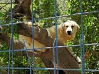 HACI MEHMET KARA - Hayvan Barınağında Olumsuz İddialara Kaymakamdan Denetleme