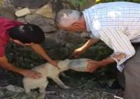 İSMAIL ÖZDEMIR - Kafası Pet Şişeye Giren Yavru Köpek İçin Seferber Oldular
