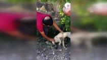 İSMAIL ÖZDEMIR - Kafası Şişeye Sıkışan Yavru Köpek Kurtarıldı