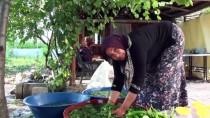 ÇAVUNDUR - Sebzelerin Turşuya Dönüşen Lezzet Yolculuğu
