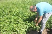 Tercan'da Taze Fasülye Yetiştiriciliği Geliştirilecek