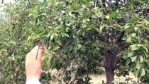 ÇAVUNDUR - Gazlı İçecekler Yerine 'Vişne Suyu' İçecekler