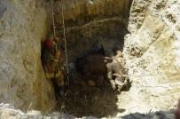 BEYLIKDÜZÜ BELEDIYESI - Kurbanlık Hayvan 5 Metrelik Çukura Düştü