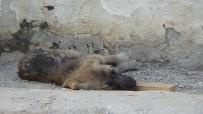 BATMAN BELEDIYESI - (Özel) Zifte Düşen Köpekler Hayvanseverler Tarafından Kurtarıldı