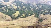 AĞRı DAĞı - Ağrı Dağı'nın 'Huş' Ormanı