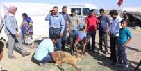 Urfalı Tarım İşçilerinin Çadırda Kurban Kesimi