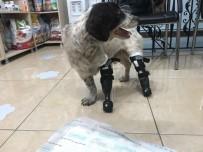 SOKAK KÖPEĞİ - (Özel) Türkiye'nin Yüreğini Sızlatan 'Sızı' Köpekten Sevindirici Haber