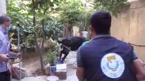 KAÇAN KURBANLIK - Şanlıurfa'da Kaçan Kurbanlıklar Zor Anlar Yaşattı