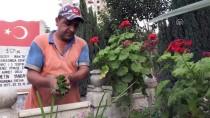 TEMİZLİK İŞÇİSİ - Şehit Mezarlarının Gönüllü Temizlikçisi