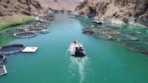 Elazığ'dan Avrupa Ve Japonya'ya Balık İhracatı