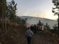 Kaymakam Ve Vatandaşlar, Ormanı Yanmaktan Kurtardı