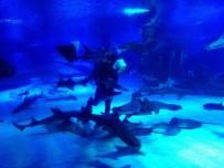 KÖPEKBALIĞI - Köpekbalıkları'nın Beslenme Saatine Yoğun İlgi