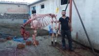 KURBAN KESİMİ - Kurban iskeletiyle hatıra fotoğrafı!