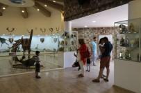 GAZİANTEP HAYVANAT BAHÇESİ - Gaziantep Zooloji Ve Doğa Müzesi'ne Yoğun İlgi