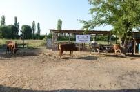 AHISKA - İHH Azerbaycan'da Kurban Kesimi Yaptı