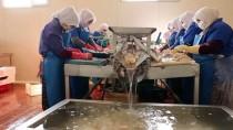 Konya'da İşledikleri Balıkla İhracat Şampiyonu Oldular