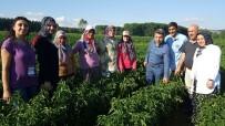 TARıM İŞLETMELERI GENEL MÜDÜRLÜĞÜ - Büyükşehir'den Yerli Ürün Teşviği