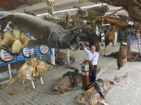 DENİZ CANLILARI - 41 Tonluk Balık Müzesi Kışa Hazır