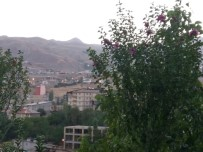 Hakkari'de İlk Defa Ekilen Hatemi Ağaçları Çiçek Açtı