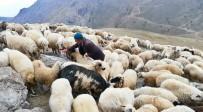 Koyunların Tuz Ve Su Keyfi