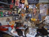SOKAK KEDİSİ - Sokak Hayvanlarına Kucak Açan Hayvansever Yetkililerden Yardım Bekliyor
