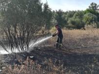 ESKIHISAR - Boş Arazide Çıkan Yangın Zeytin Ağaçlarına Sıçradı