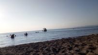 Çanakkale'de Korkutan Deniz Canlısı