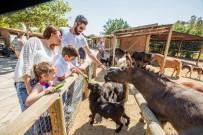 İZMIR DOĞAL YAŞAM PARKı - Doğal Yaşam 'Bayram' Etti