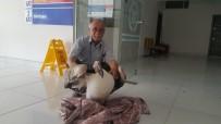 Gökten Pelikan Düştü