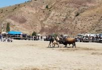 TOSUNLAR - İspir'de Önce Boğalar Sonra Çevredekiler Güreşti