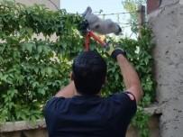 İtfaiye Ekipleri, Mahsur Kalan Hayvanları Kurtardı