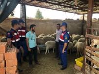 GEYRE - Karacasu'dan 50 Adet Koyun Çalan 2 Hırsız Tutuklandı