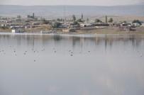 BARAJ GÖLÜ - Kars Baraj Gölü Yaban Hayatına Ev Sahipliği Yapıyor