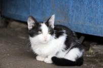 YAVRU KEDİ - Sakat Kediye Sahip Çıktılar