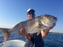 TROL - Saros Körfezi'nde Dev Sinarit Balığı