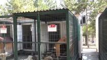 Sokak Hayvanlarına Klimalı Barınak