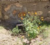 MEZAR TAŞI - Tarihi Mezar Taşı Duvardan Çıkartıldı